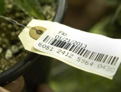 Helix TCS – New Cannabis Ventures