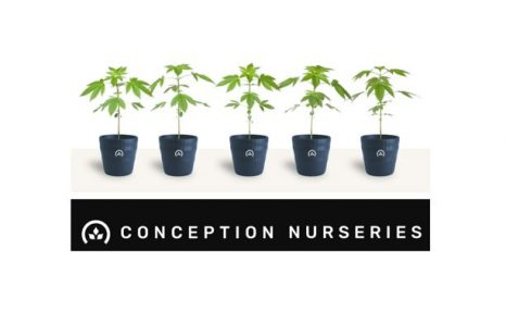 Micro-Propagation Cannabis Clone Cultivator Conception Nurseries Raises $12 Million