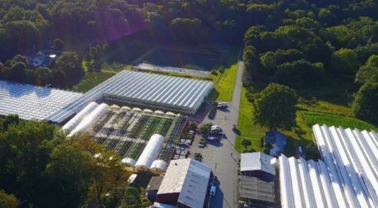 TerrAscend Receives Approval to Commence Cultivation at its New Jersey Greenhouse